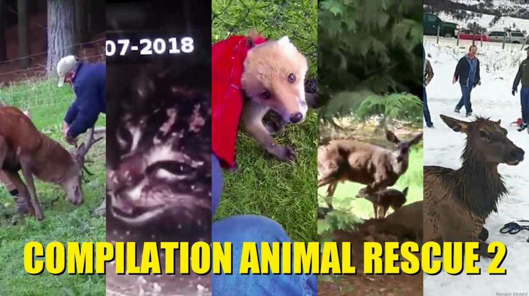 COMPILATION ANIMAL RESCUE 2 OF 2