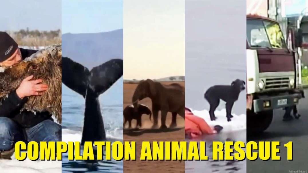 ANIMAL RESCUE COMPILATION 1 OF 2