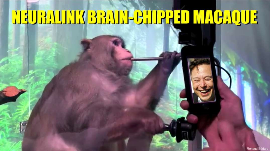 ELON MUSK AND HIS NEURALINK BRAIN-CHIPPED MACAQUE